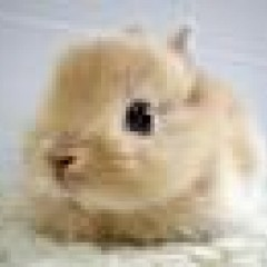 Fluffy Bunny's picture